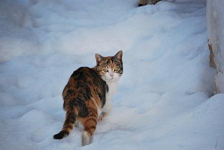 cat, snow, winter, domestic Cat, pets, animal, cute