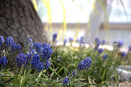 kevadel, lilled, loodus, Vaata, Kevadlilled, taimed, Botaanikaaed
