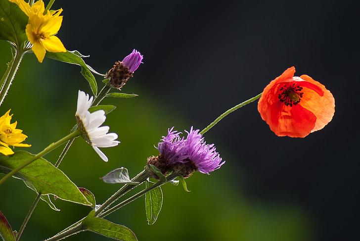 flowers, wild flower, nature, garden, flower, colors