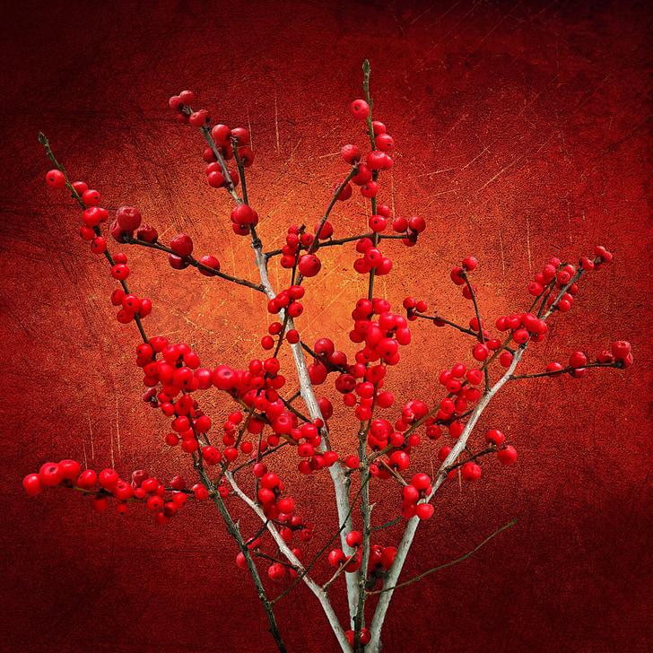 kết cấu, nền tảng, thực vật, quả mọng, Tổng thống Bush, màu đỏ, chi nhánh