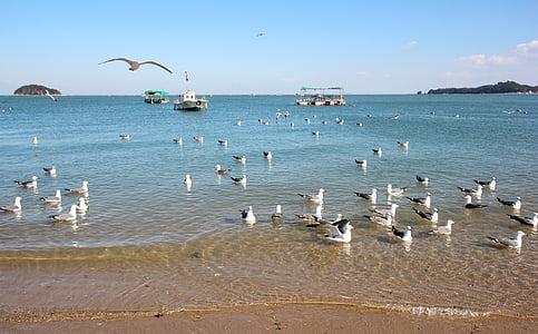 ทะเล, ใหม่, นกนางนวล, ทราย, ชายหาด, ทะเลตะวันตก, dangjin