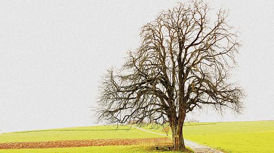 tree, landscape, fields, season