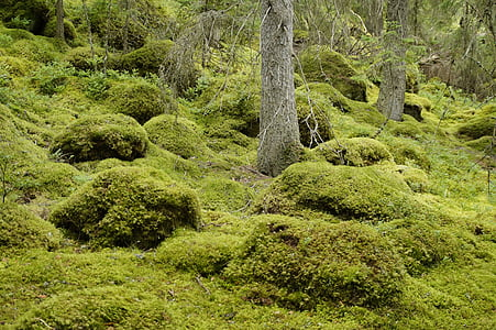 ภูมิทัศน์, พืช, สวีเดน, ป่า, มอส, ป่าเวทมนตร์, เทพนิยาย