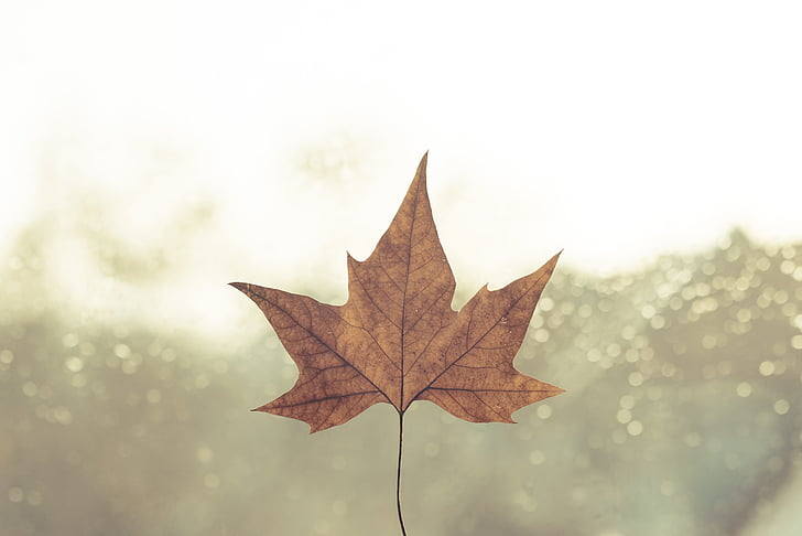 day, daylight, fall, leaf, light, mood, nature