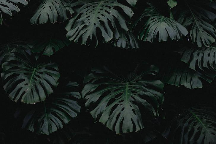 tmavé, Zelená, Leaf, rastlín, Príroda, rozostrenie, Vonkajší