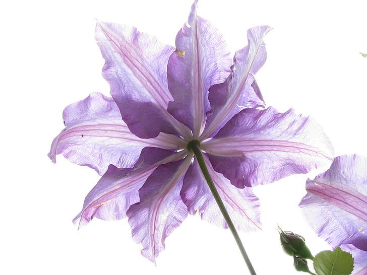 λουλούδι, φύση, χλωρίδα, Κήπος, φυτό, πέταλο, λουλούδι κεφάλι