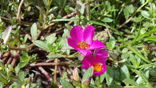 flowers, wild flower, purple flower, pollen, wild herbs