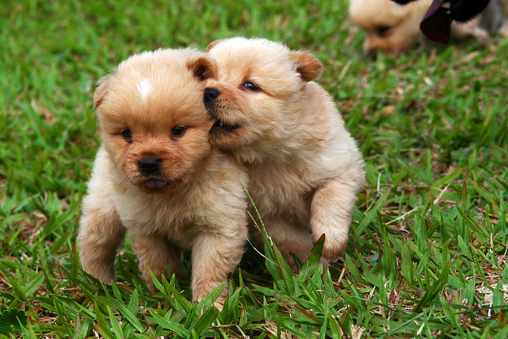 dogs, dog, puppies, animals, tranquility, pets