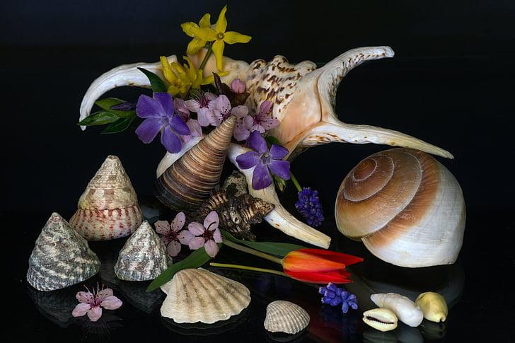 bodegons, Musclos, flors, tulipes