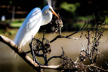 heron, bird, birdie, nature, animals, ecology