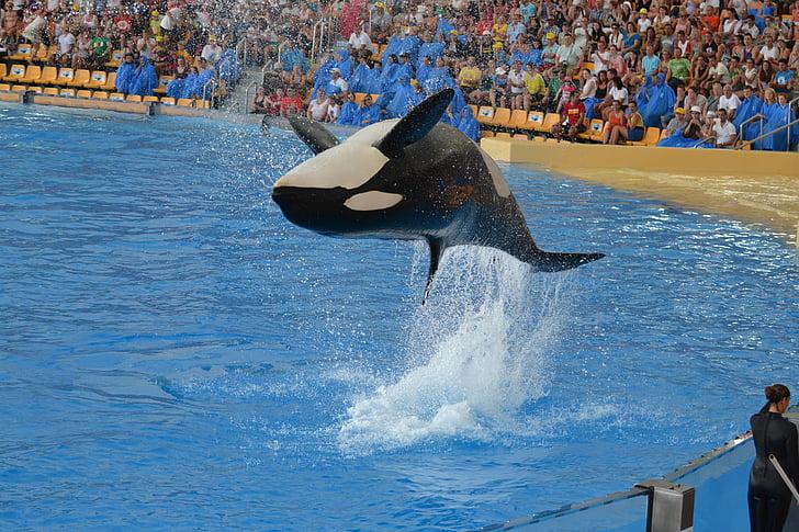 Orca, pokazati, Tenerife, vodeni park, skok, performanse