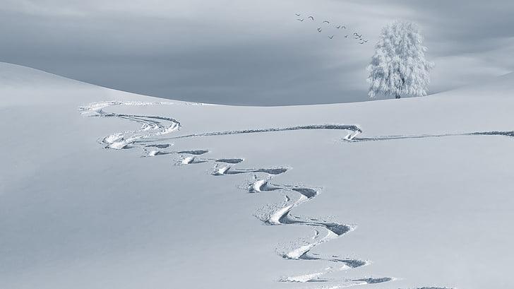 hivernal, muntanya, neu, paisatge de neu, l'hivern, fred, arbre