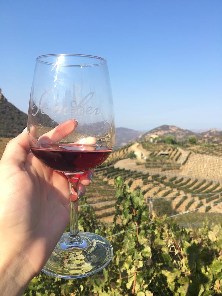 вино, винарска изба, напитка, стъкло, дегустация, червен, винопроизводство