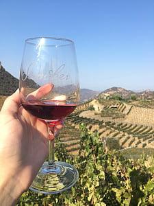 vi, celler, beguda, vidre, degustació, vermell, elaboració del vi