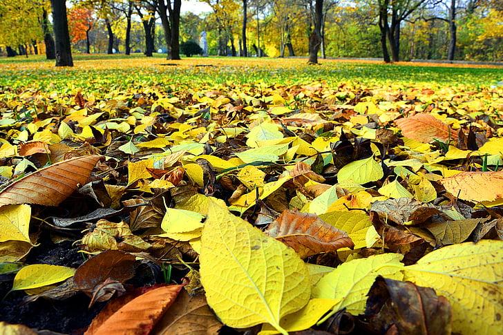 tardor, fulles, natura, temporades