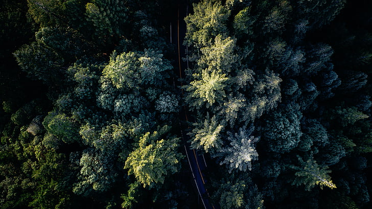 Príroda, Woods, Forest, stromy, Zelená, cestné, strom