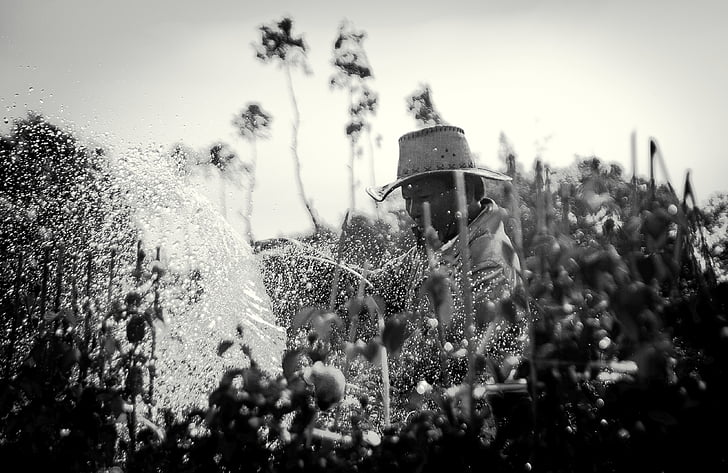 black-and-white, farm, farmer, man, person, plants, watering