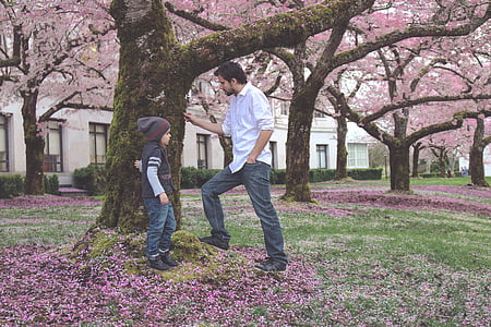 father, son, spring, bloom, blossom, child, family