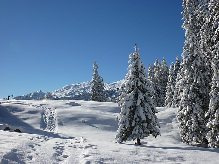 firs, nature, forest, snowy, winter, snow, winter magic