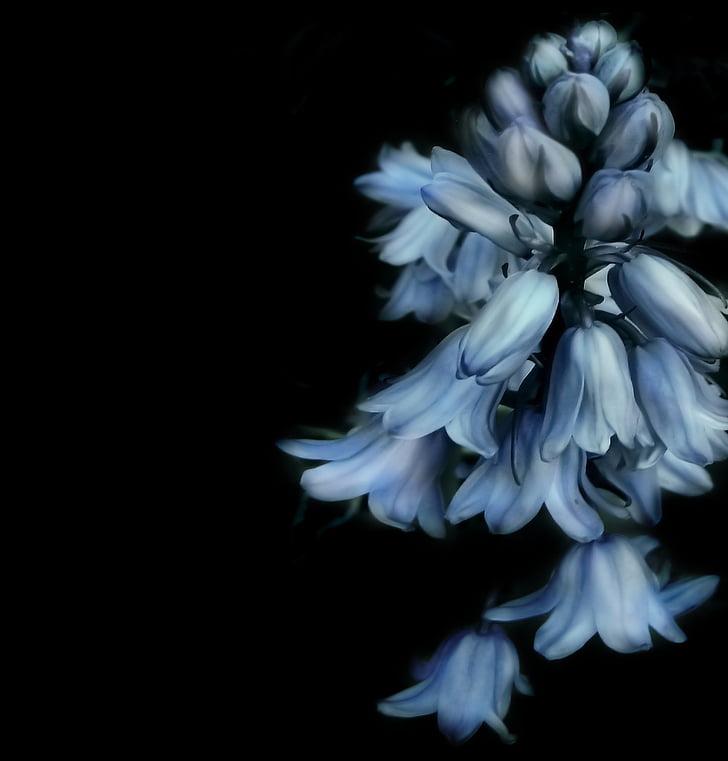Free Photo Flower Studio Lighting Plant Nature Black