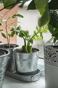 Sân vườn, Trang trí, lá, thực vật, màu xanh lá cây, đất, lọ hoa