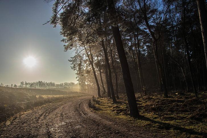lasu, zachód słońca, krajobraz, Natura, drogi, na zewnątrz, dekoracje