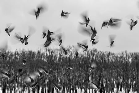 ocells, ramat, eixam, Inici, volant, fugint, animals