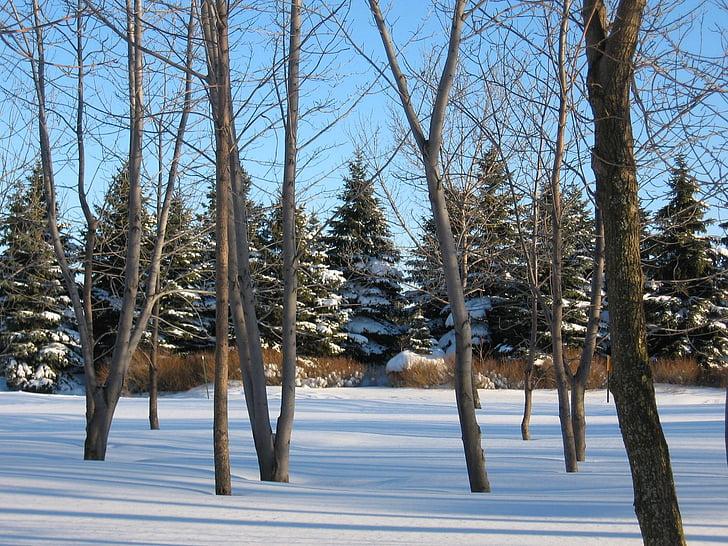 landskab, vinter, sne, træer, natur, vinterlandskab, snedækket landskab