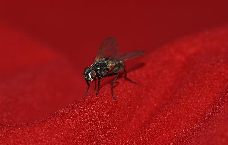 skristi, mažas, Juoda, sparnas, vabzdžių, uždaryti, gyvūnų