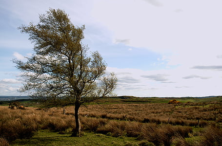 tree, landscape, countryside, fields