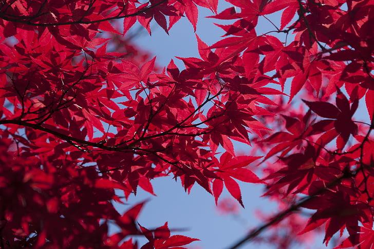 medžiai, lapai, vasaros, rudenį, parkas, filialas, lapų