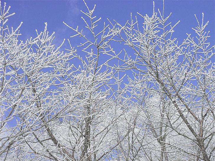 scène de la neige, branches de neige, forêt de neige
