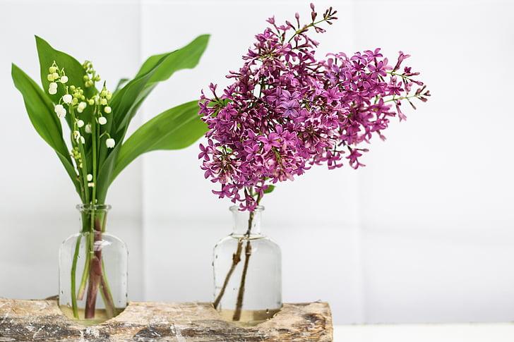 tord, lila, flor, campana, primavera, 1r pot, lliri de la vall