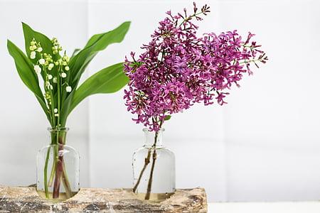 sammas, Lila, kukka, Bell, kevään, 1 ° voi, Kielo