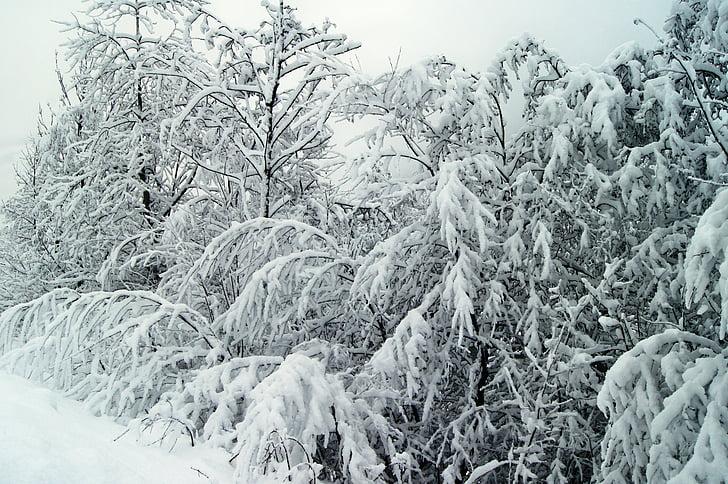 mùa đông, tuyết, wintry, Thiên nhiên, trắng, bụi cây mùa đông