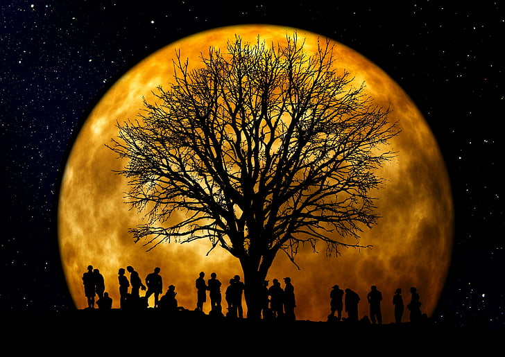 träd, Kahl, månen, mänskliga, grupp, siluett, bakgrund