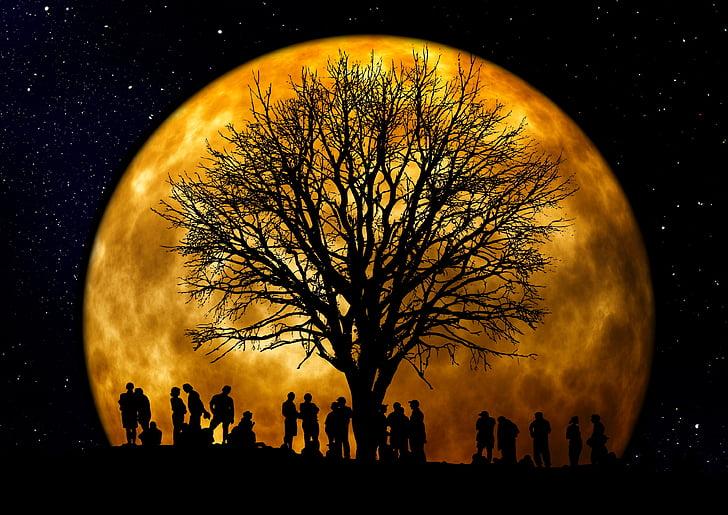 boom, Kahl, maan, menselijke, groep, silhouet, achtergrond