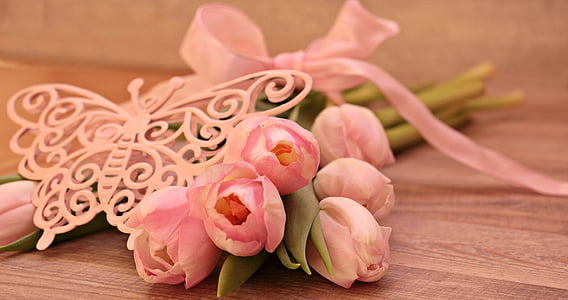 tulipes, Tulipa, papallona, papallona Rosa, flors, schnittblume, Tulipa de cria