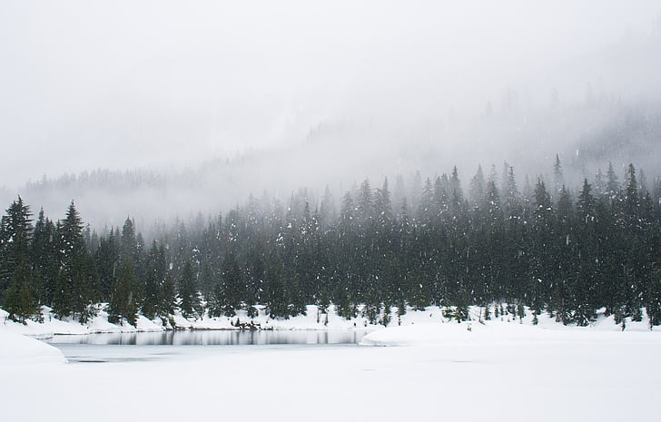 nature, landscape, woods, forest, snow, winter, cold