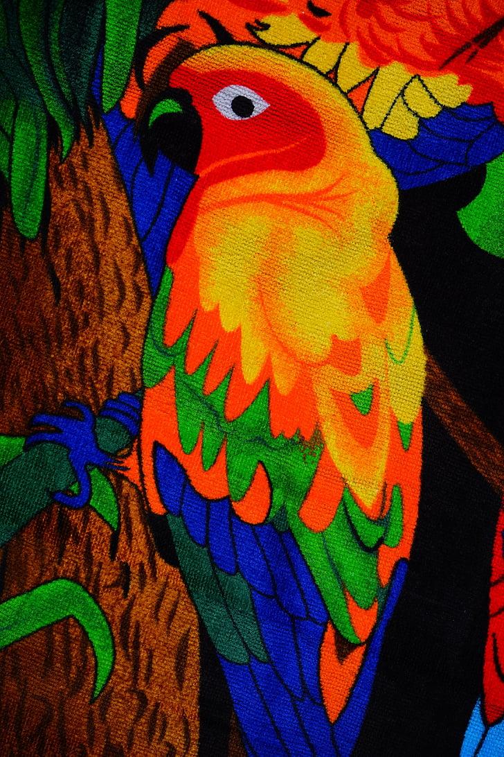 papagáj, színes, madár, állat, törülköző, fürdőlepedő, szín