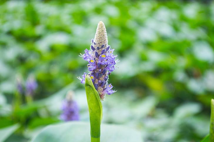 malá květina, zahrada, parku, rostliny a květiny, bezejmenný květinky, květiny