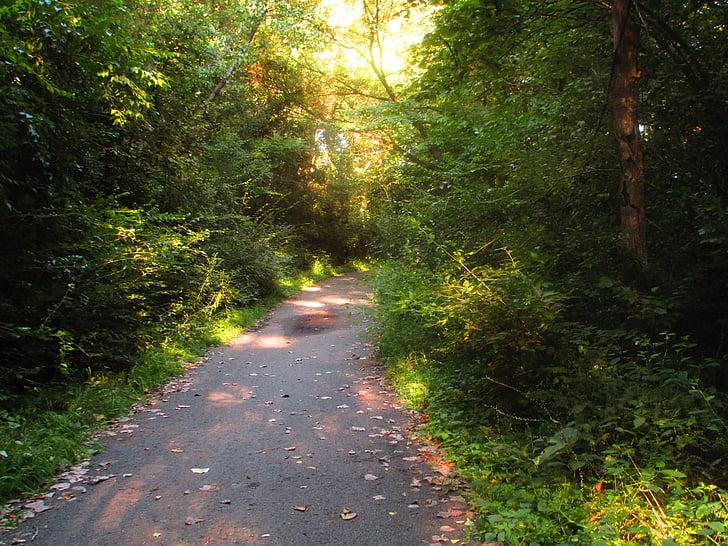 ceļš, bruģis, asfalta, velosipēds, darbojas, velosipēdu ceļš, skriešanas ceļš