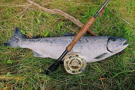 salmon, rod, reel, alaska, fishing, fish, river