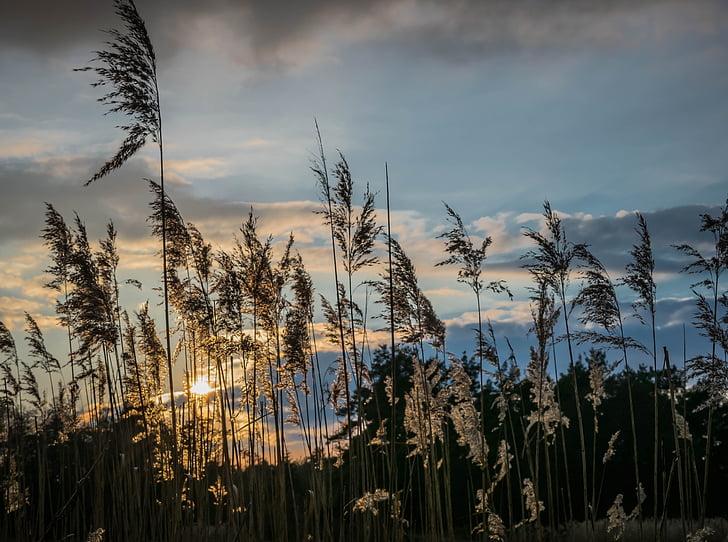 вечір, небо, Рід, Захід сонця, Сутінки, трава, Романтика