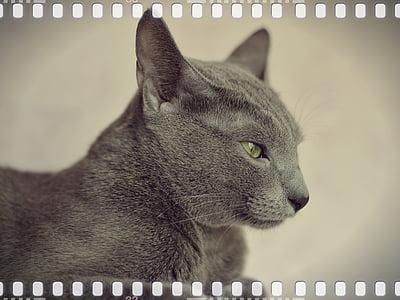 cat, animal, pet, cat person, cat eyes, views, eyes