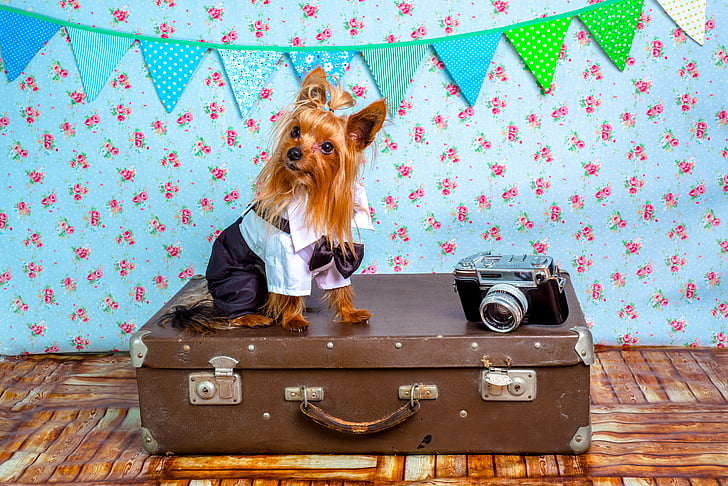 dog, suit, animals suit, sweet, pet, traveler, camera