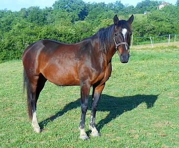 horse, breeding, breeding horses, horse breeding, broodmare, halter, equine