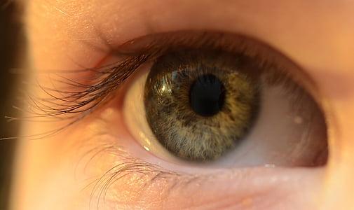 eye, eyelash, eyelid, iris, lens, organ, human Eye