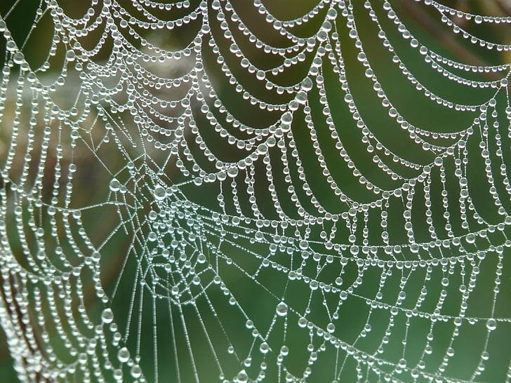 spindelnät, Morgentau, dagg, Dewdrop, DROPP, nätverk