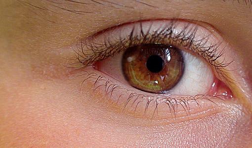 eye, the anatomy of a, construction of man, eyelids, eyelashes, żrenica, eye color